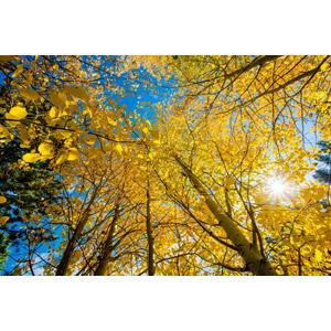 ○○の秋⁉